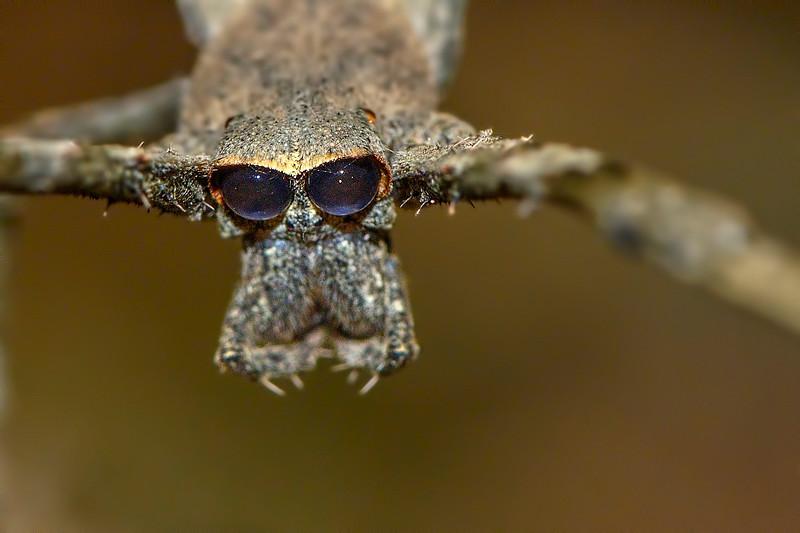 Net-Casting-Spider-closeup.jpg