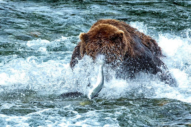 Alaska_2014_FH0T7585.jpg