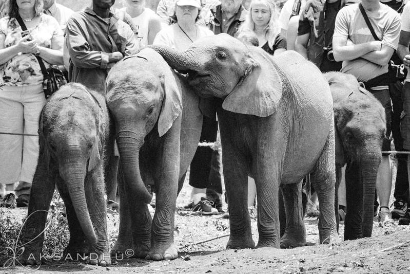 Safari-Africans-167.jpg