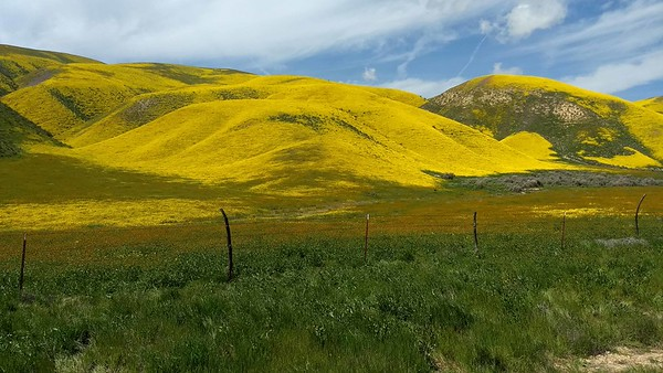 2019-03 Superbloom in California