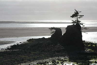 16 Lincoln City Cypress