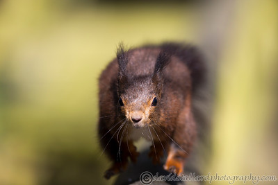 British Wildlife Centre 25-03-16