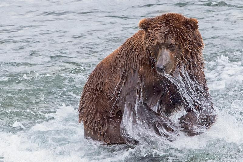 Alaska_2013_FH0T4895.jpg