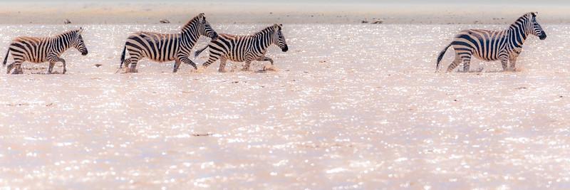 serengeti zebras 0411.jpg