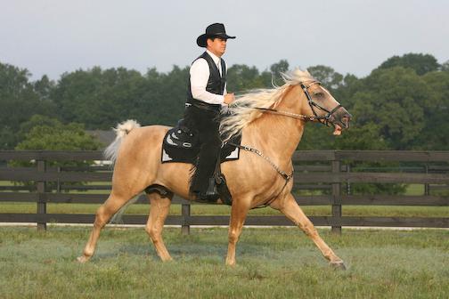 Ivory Pal Under Saddle Part II