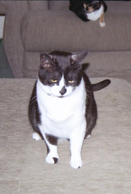 2003 12 - Cats 38.jpg