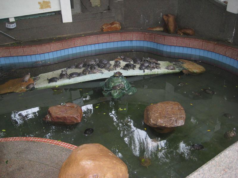 turtles_1.jpg