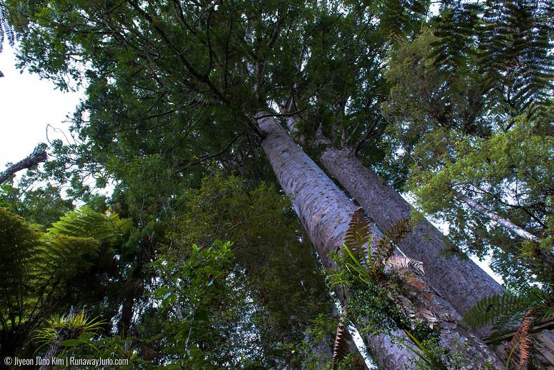 05.14_Kauri Grove-3558.jpg