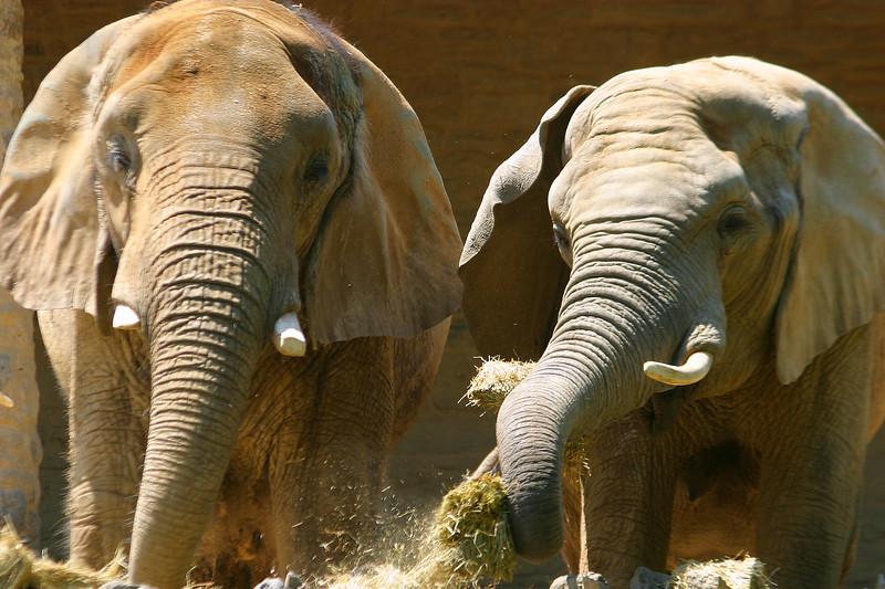 The elephants.