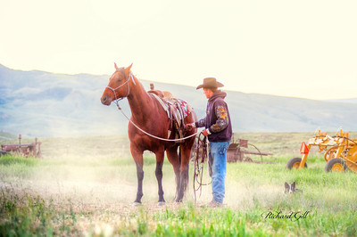 Cattle Drive HDR 130627
