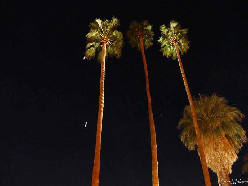Palm Springs Street Fair (21 of 29).jpg
