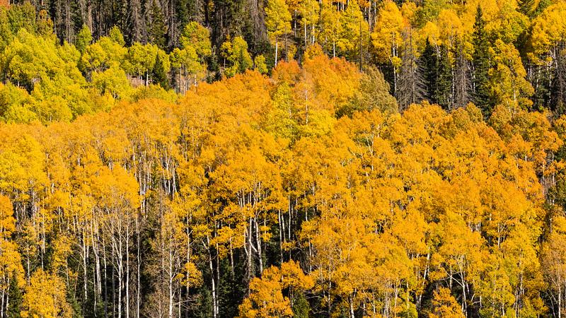 Colorado19_5D4-1555.jpg