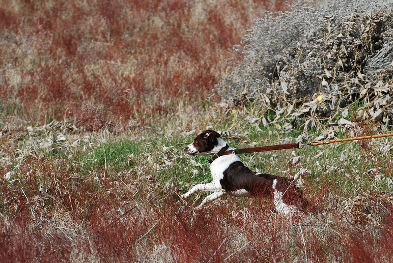 Rea just saw the quail fly