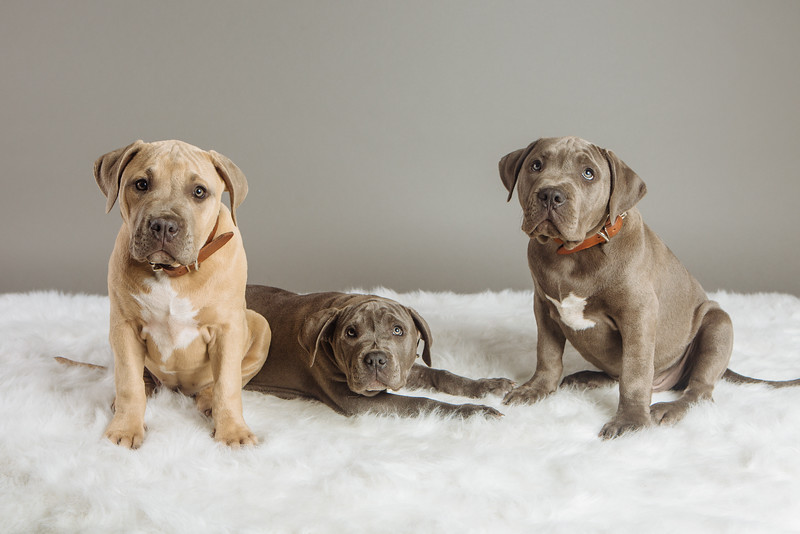badap-puppies-30.jpg