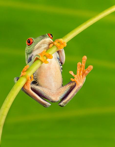 Frogscapes049_Cuchara_5987_083112_170047_5DM3L_11x14.jpg