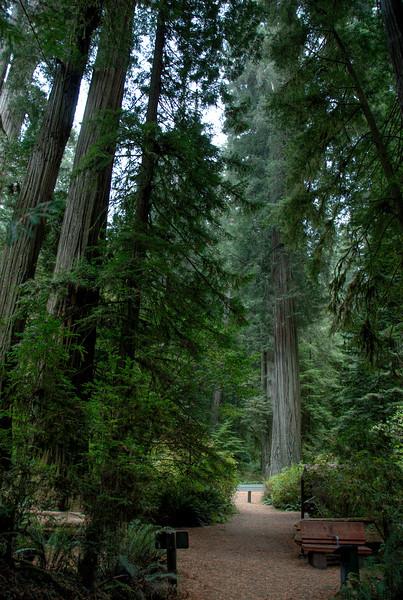 Shot of the tall Redwood trees inside Redwood National Park