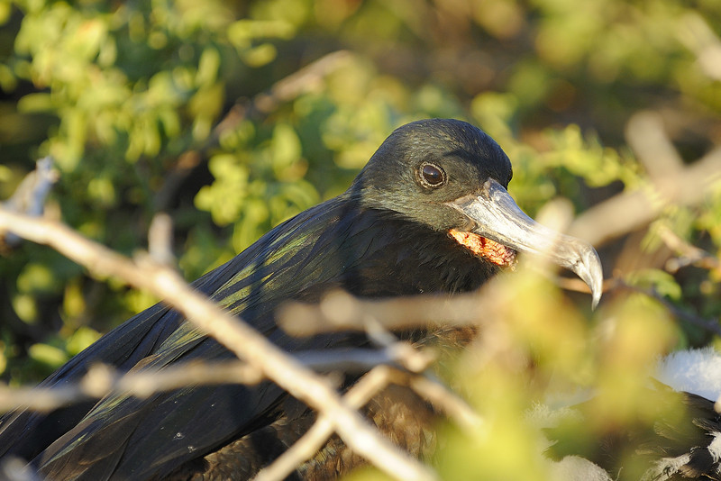 Galapagos Jul 2008 007.JPG