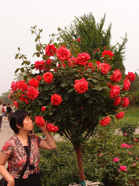 20120513_1359_0392 北京植物园