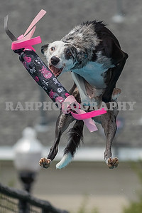 Splash Dogs Heritage Park Sunday 08-21-2016