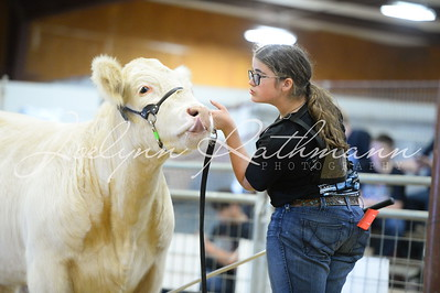 Buckle Showmanship - 12-13