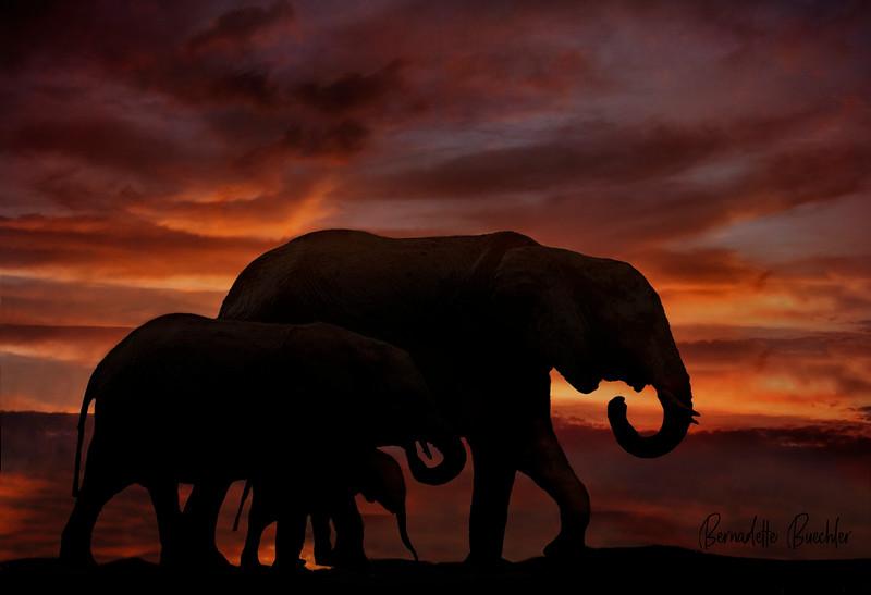 Sunset Trek_Tanzania, Africa.jpg