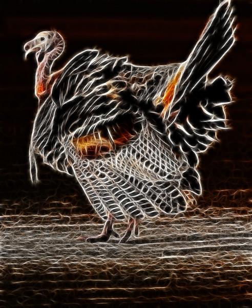 turkeyfractalius1600again.jpg