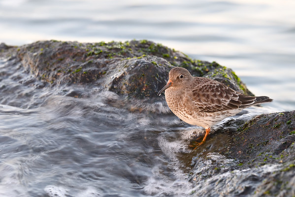 Behind the Image: Long exposure sandpiper