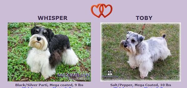 Whisper & Toby Puppies, DOB 4/24/2021