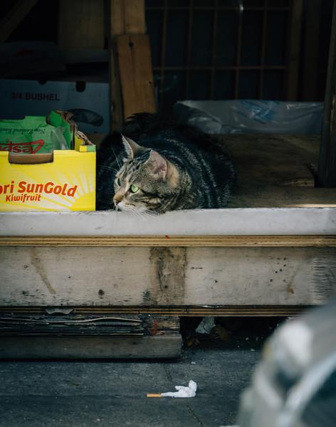 Chinatown market kitty 1.jpg