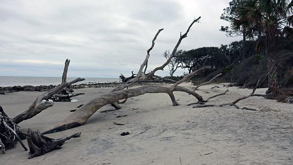 January 19:  Driftwood Beach & the capsized cargo ship .  .  .