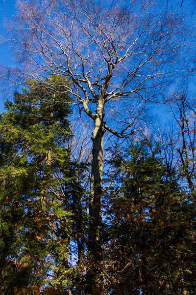 Chestnut_Ridge-3.jpg