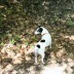 farley pups 200-2 (1).jpg