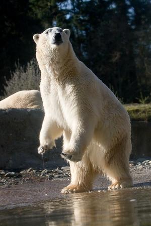 Point Defiance Zoo & Aquarium: Arctic Tundra