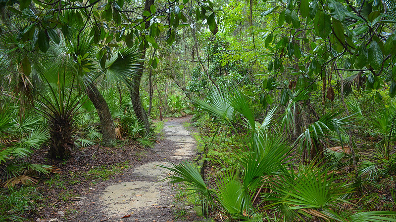 Southern magnolias, ferns, and saw palmetto
