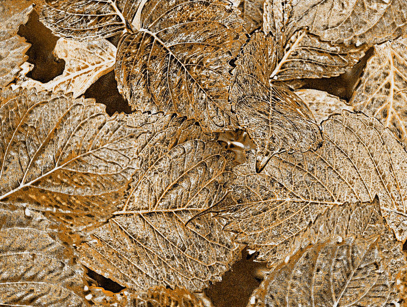 local_area_23908_bronzed_leaves-sm.jpg