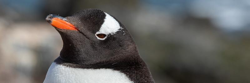 2019_01_Antarktis_01227.jpg