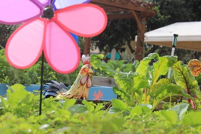 EDU-Garden Day 2015