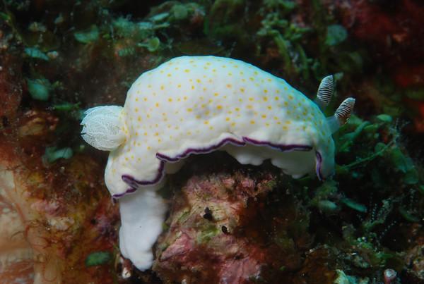Underwater Colour Extravaganza