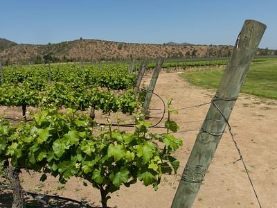 Chile Wine district