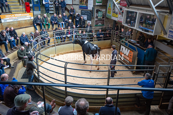 NWA Lancaster Auction Dairy Show and Sale March 2019