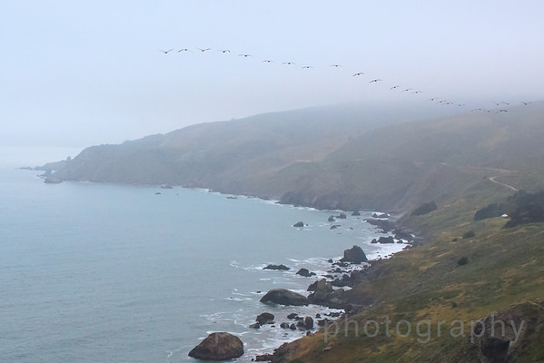 Muir Beach Overlook on a foggy day with a flock of pelicans flying over.