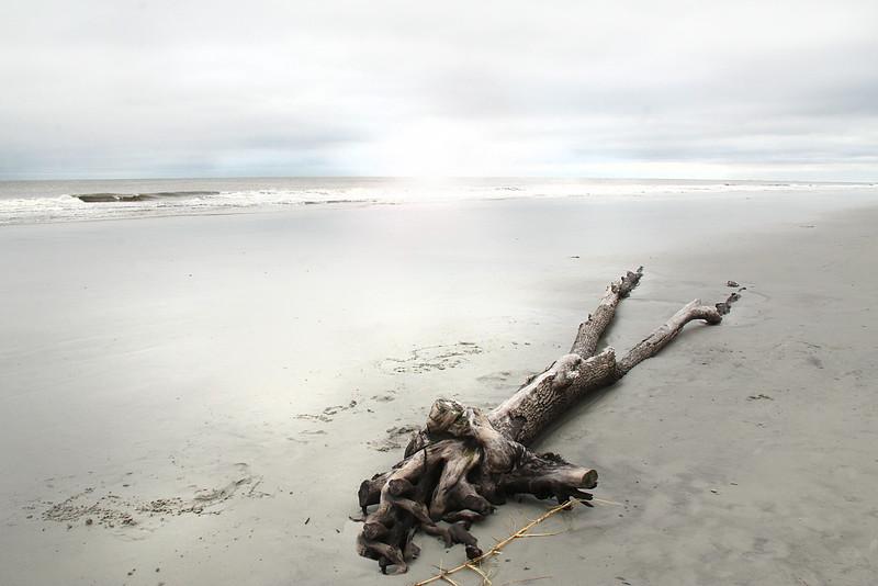 beach log.jpg