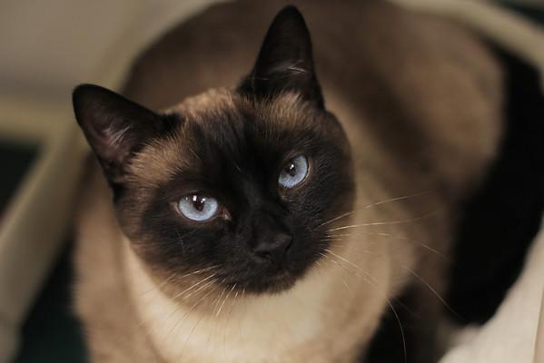 Seattle Humane - Pet Stories