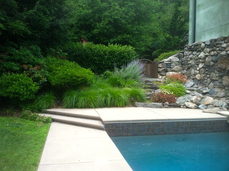Pool and Plantings