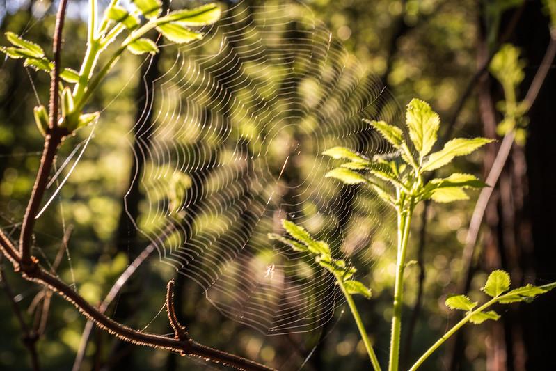 Tom_Davids-Purisma_Creek-20.jpg