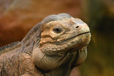 Nature - Reptiles & Amphibians