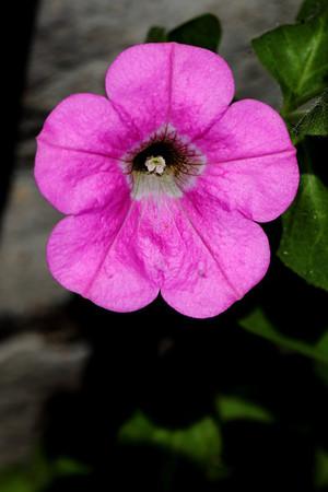 Mom's Garden 06-07-2011
