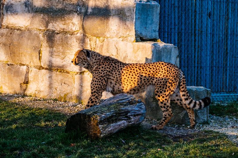 Tonis Zoo-0296.jpg