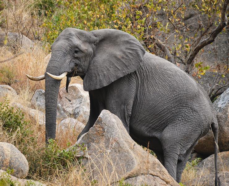 Elephants_Kruger-9.jpg