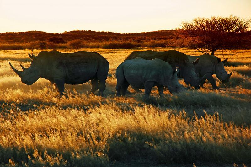 Africa 2006-02.jpg